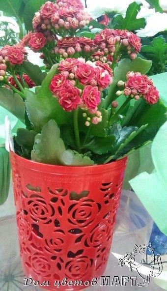 Комнатные цветы в подарок