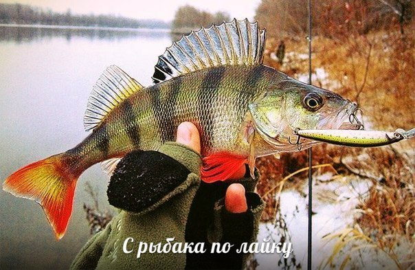 Клуб любителей воблеров | Рыбалка | ВКонтакте