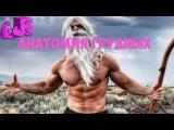 Анатомия Грудных - ТОП 5 упражнений на грудные fyfnjvbz uhelys[ - njg 5 eghf;ytybq yf uhelyst