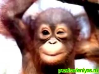 Прикольное поздравление Гоги от обезьянки С днем рождения!