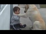 Творец не делает ошибок. Любовь собаки к малышу с синдромом Дауна