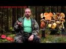 Пять самых ядовитых грибов России