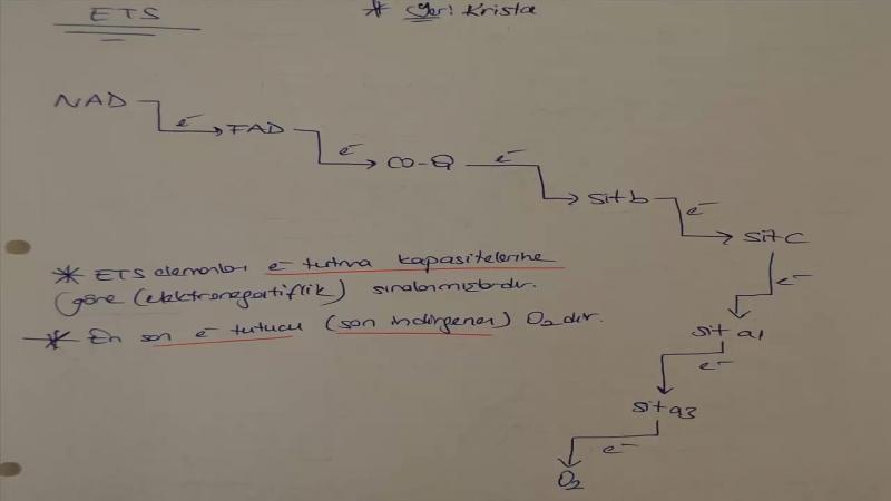 Hücresel Solunum 2 Oksijenli Solunum - 11. Sınıf Biyoloji Konu Anlatım