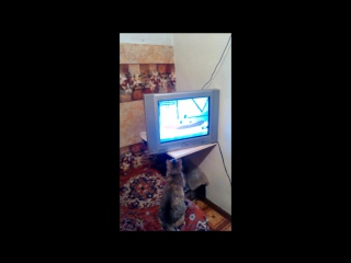 Кошка смотрит мультфильм про котенка Гава