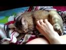 Кошка сосёт лапку