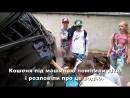 Водію міськвиконкому довелося витягувати кошеня з колес автомобіля міського голови