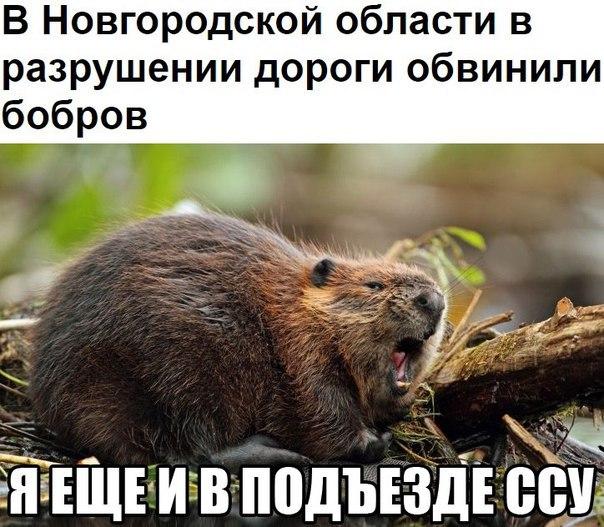 Российские силовики начали борьбу за власть, - Stratfor - Цензор.НЕТ 5912