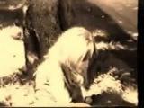 JIM  MORRISON e Pamela Courson - Adrenalina