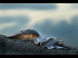 Надежда Плевицкая. Чайка Nadezhda Plevitskaya - The Seagull