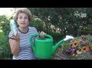 Как ускорить созревание компоста. Сайт Садовый мир