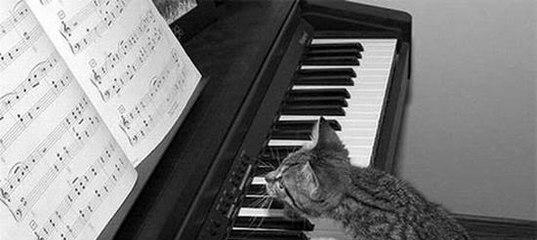 Диагноз – не-Моцарт Надо ли педагогу переживать Заметка про обучение детей игре на фортепиано 481