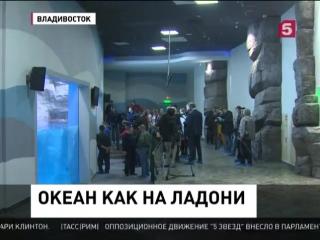 Во Владивостоке готовятся к открытию крупейшего в России океанариума