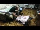 Кошка защищает Ребенка