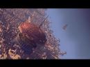 Планета сокровищ (2002) Трейлер
