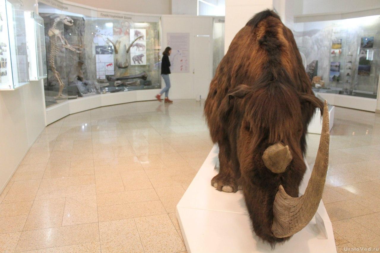 В Челябинском краеведческом музее