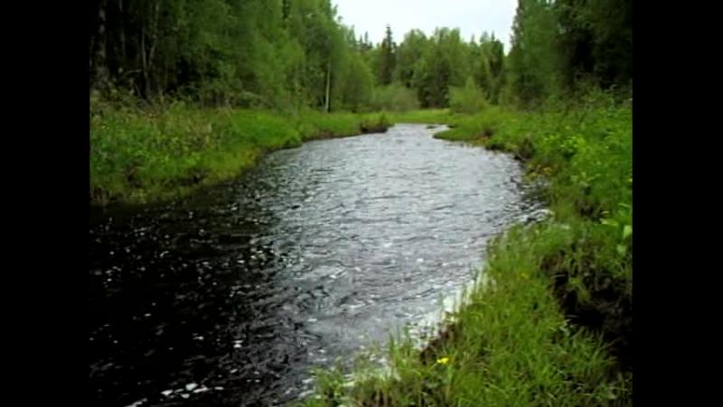 Течет река Порма(м) Живой звук