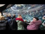 Кино про рыб...