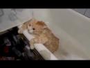 Толстый кот не может выпрыгнуть из ванны) - The funny fat cat can not get out of the bath -)