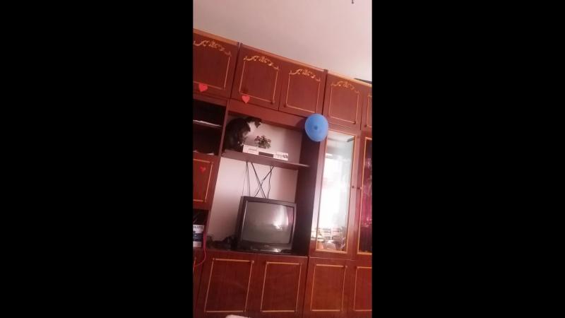 Марлик и шарик ))