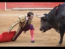 Deadly bullfight on a lap! Коррида на коленях! 2015