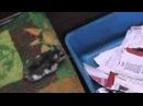 Дружба хомяков и котов( часть 1)-не повторять!