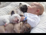 Cutest Relationship French Bulldog And Baby Videos Compilation