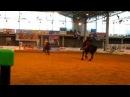 Танго на фризских конях