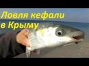 Ловля кефали на Черном море в Крыму-сентябрь