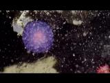 На дне океана нашли загадочный фиолетовый шар