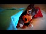 Кошачий Youtube Кот обнимает плюшевого мишку!