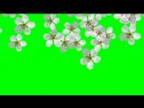 Видеопереход с хромакеем. Весенний цвет. Футаж