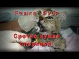Кошка Буся Нужна операция