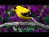 Bandari - One Day In Spring