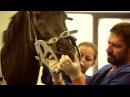 Стоматология лошадей. В неприемный день с вет. врачом Михаилом Сучковым.