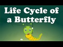 Life Cycle of a Butterfly It's AumSum Time