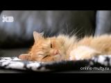 Кот - обманщик Кот - подделка Counterfeit Cat Disney XD (2016) трейлер 2 online-multy.ru