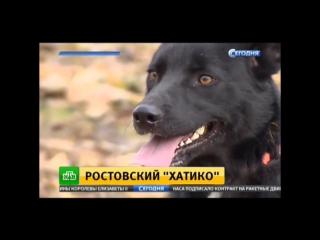 Ростовский Хатико. Удивительная история