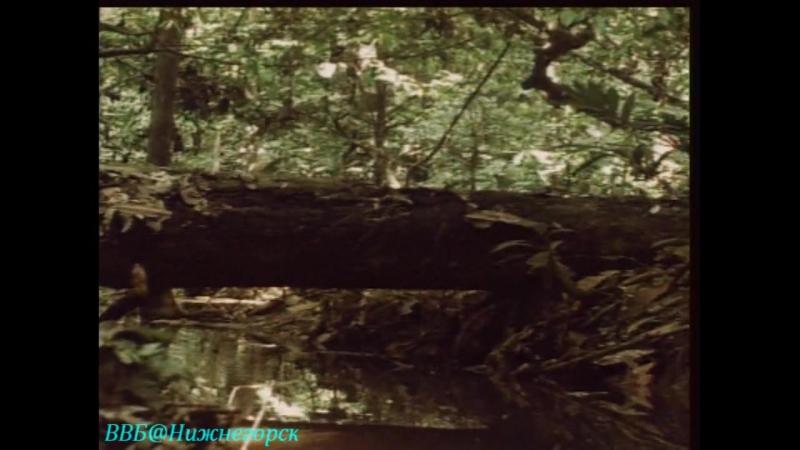 Документальный фильм BBC Тело человека Мозг человека часть 5 1998
