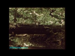 Документальный фильм BBC «Тело человека_ Мозг человека», часть 5. (1998)