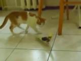 Попугай на осмотре у котёнка