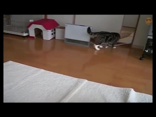Кот и пакет. Cat and package (1)