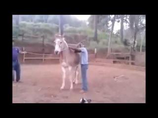 Caidas y videos graciosos 2016 Super caidas chistosas golpes bromas sustos - videos de risa