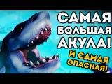 САМАЯ БОЛЬШАЯ АКУЛА! И САМАЯ ОПАСНАЯ! - Feed and Grow: Fish