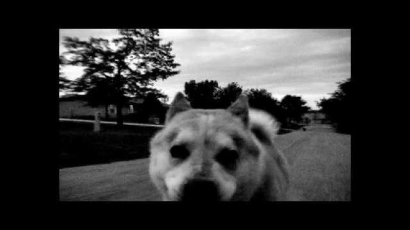 Pixies - Where Is My Mind - High Definition