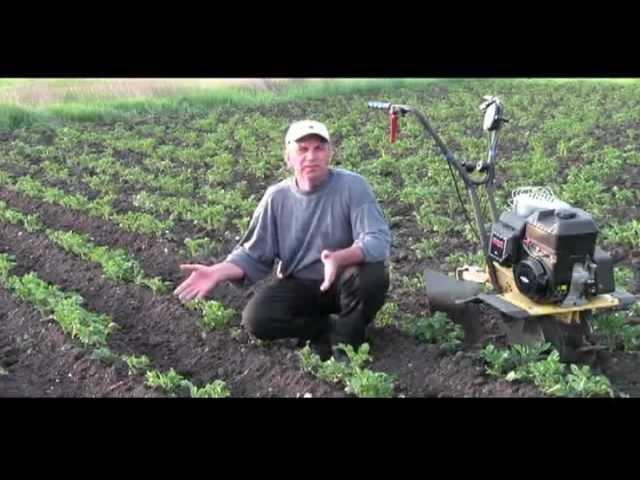 Рыхление междурядий. Окучивание картофеля.