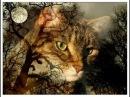 Магия кошек захват разума Параллельная цивилизация vfubz rjitr pf dfn hfpevf gfhfkktkmyfz wbdbkbpfwbz