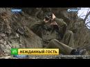 Появившийся в горах Дагестана леопард ворует скот у сельских жителей