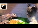 Nice Kitty Shares Delicious Salad With 3 Hungry Lizards | CatNips