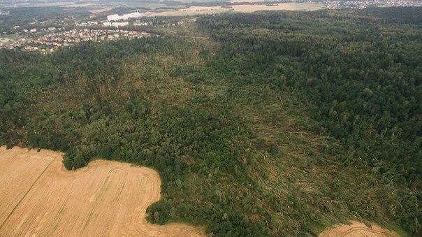 Ураган практически уничтожил лес в Прилуках.