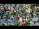 «С моей стены» под музыку Сергей Зверев feat Adil Karaca - Kimyam degisti ♫ .